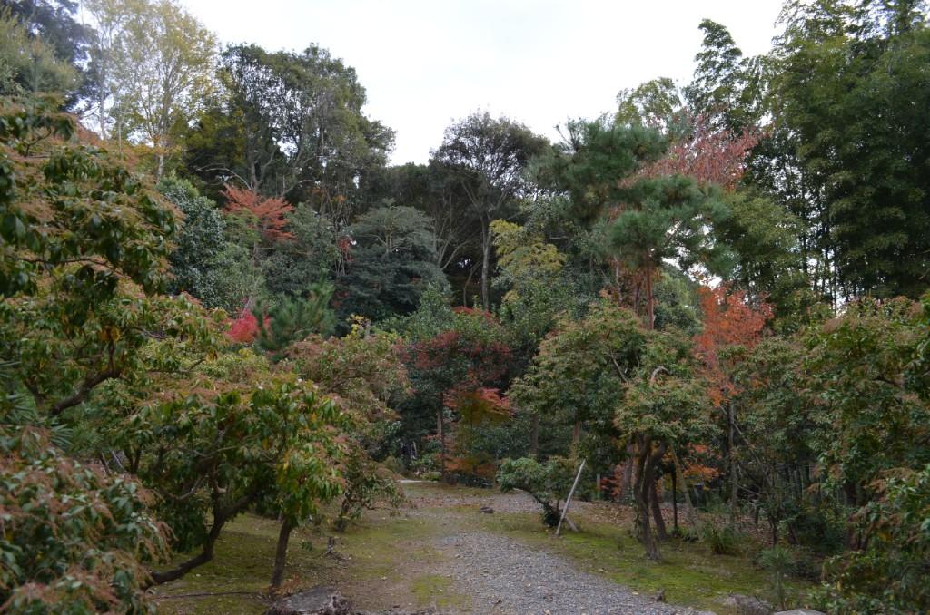 Kodaiji-tempel-koyo-herbst_6
