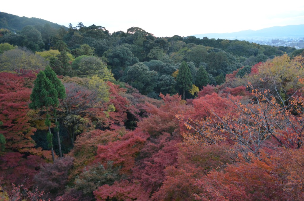 Kyoto-Kiyomizu-dera-Tempel-herbst-koyo-autumn_1