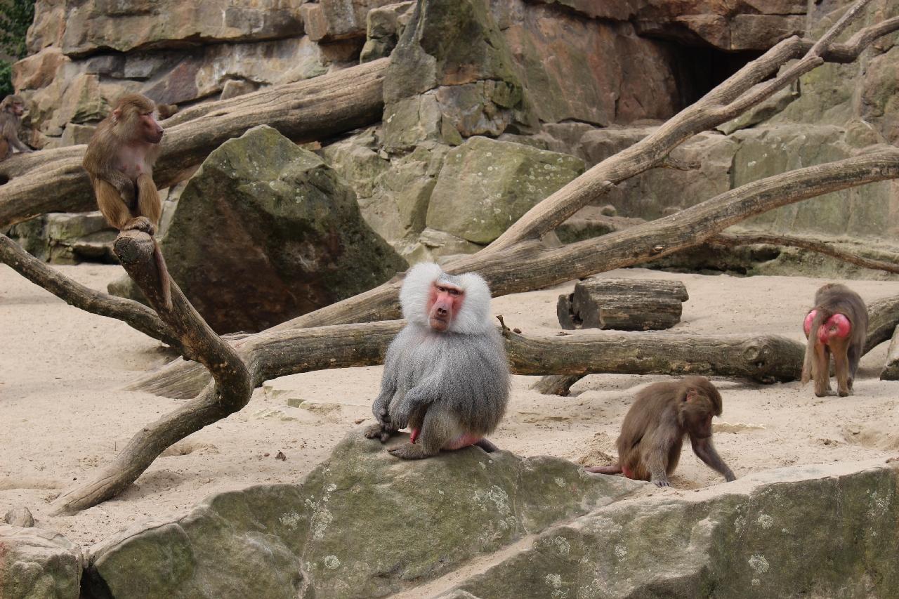 berlin-zoo-frühling-2016-iebe-tiere-1