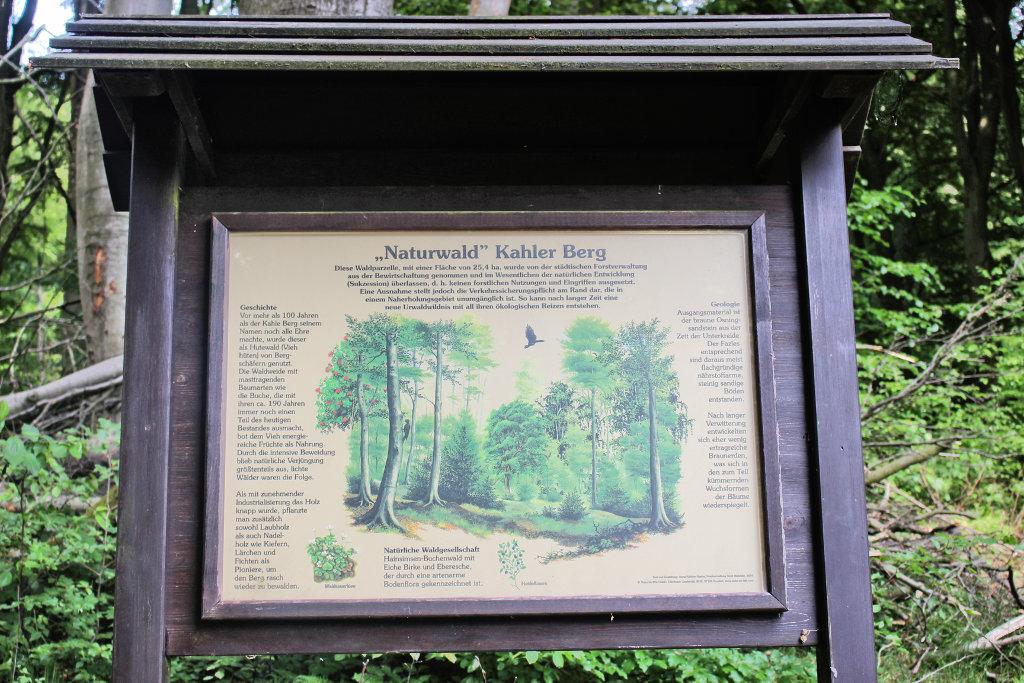 bielefeld-teuto-klosterruine-wandern-jostberg-kahler-berg-route (7)