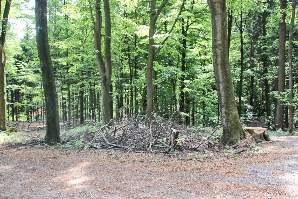 bielefeld-teuto-klosterruine-wandern-jostberg-kahler-berg-route (8)
