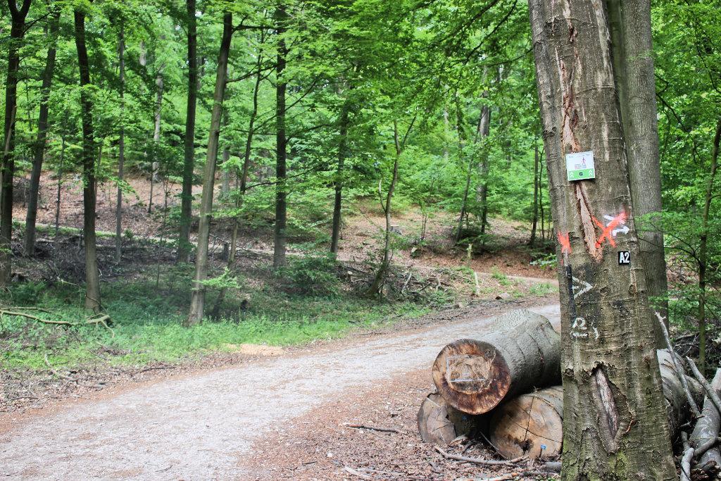 bielefeld-teuto-klosterruine-wandern-jostberg-route (1)