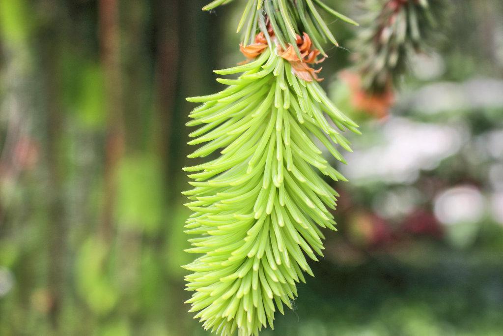 botanischer-garten-bielefeld-frühling-tipp-ausflug (1)