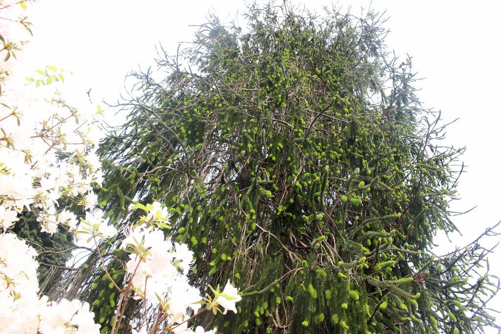 botanischer-garten-bielefeld-frühling-tipp-ausflug (4)