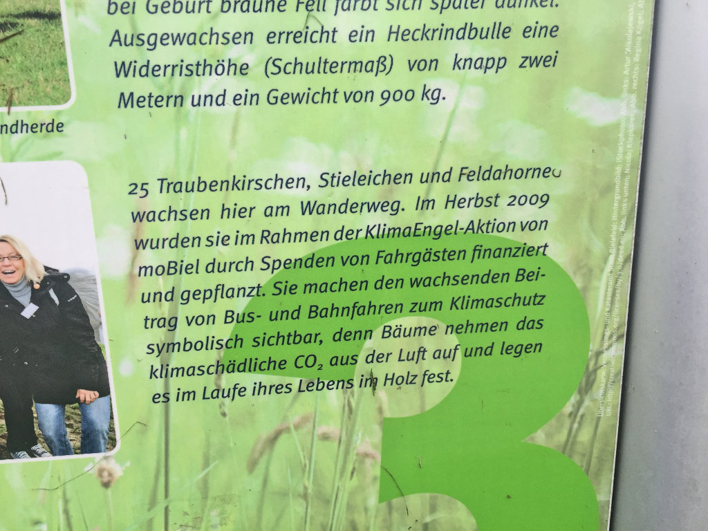 GeoCaching-Bielefeld-Obersee-Rätsel-Wandern-Natur-Johannisbauaue (2)