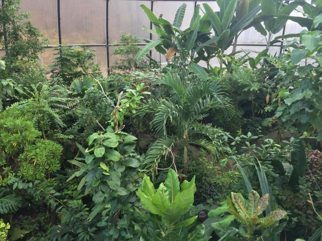 botanischer-garten-tropenhaus-zuerich-kostenlos-tipp-geheimtipp-1