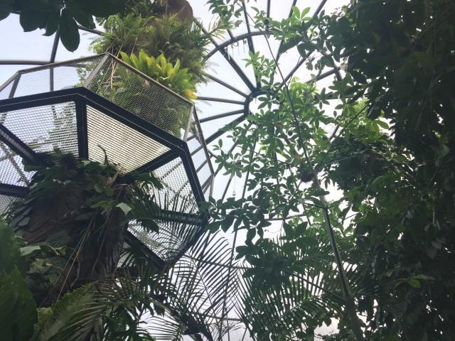 botanischer-garten-tropenhaus-zuerich-kostenlos-tipp-geheimtipp-12