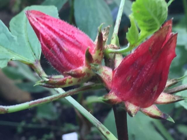 botanischer-garten-tropenhaus-zuerich-kostenlos-tipp-geheimtipp-19