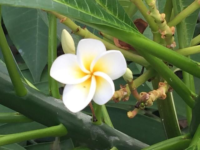 botanischer-garten-tropenhaus-zuerich-kostenlos-tipp-geheimtipp-3