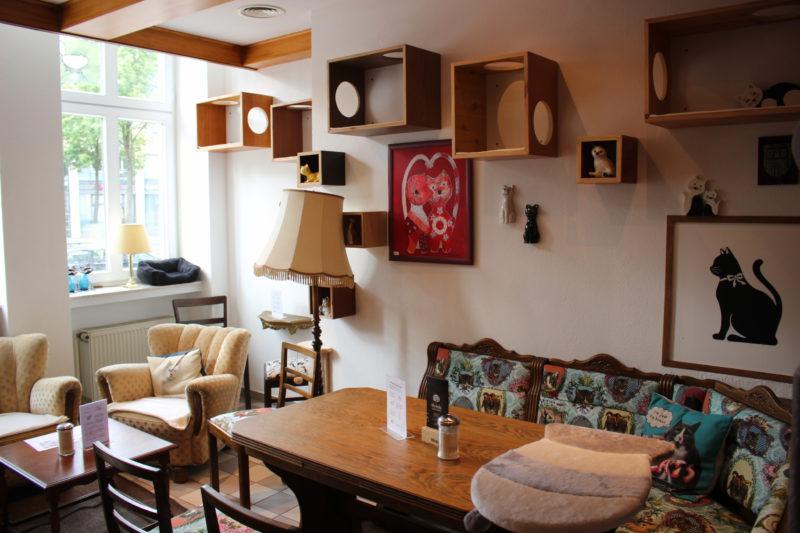 torte auf die tatze katzencaf miezhaus bielefeld. Black Bedroom Furniture Sets. Home Design Ideas