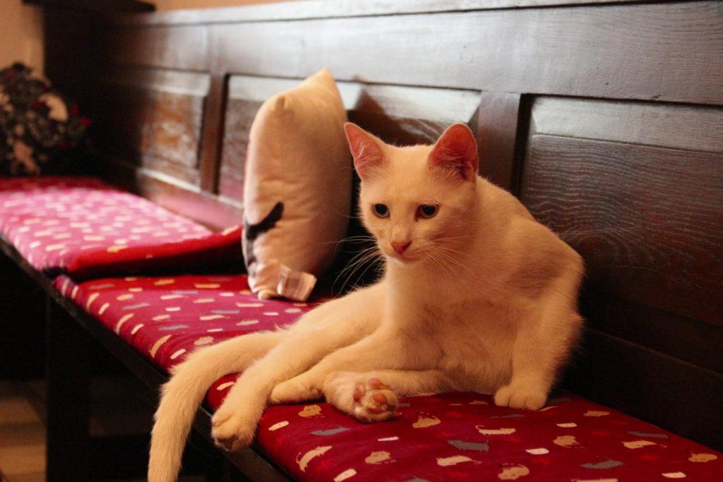 Katze auf Sitzbank im Katzencafé Miezhaus Bielefeld