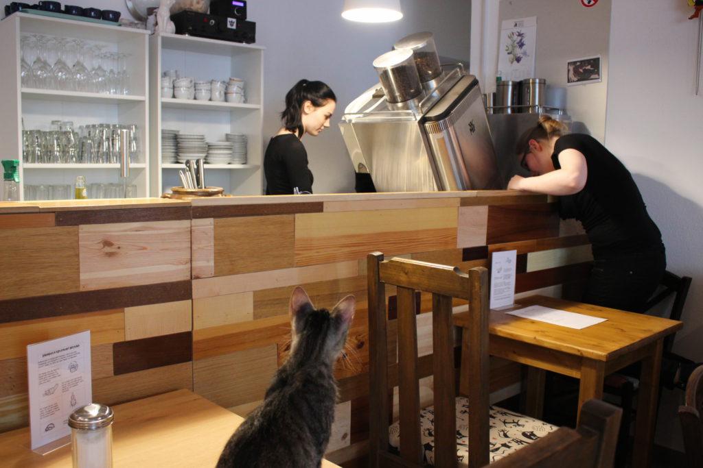 Aufmerksame Katze im Katzencafé Miezhaus Bielefeld