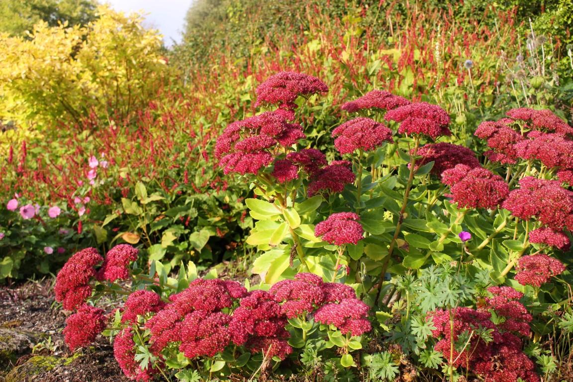 Blumen im Garten des Hotel Endsleigh