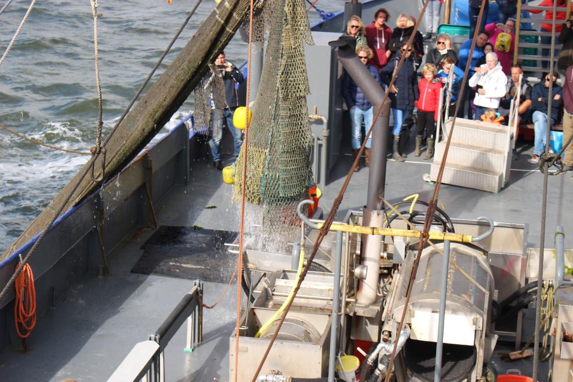 Der Krabbenfang wird an Bord gebracht